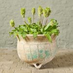 Small Ponne Planter