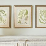 19th Century British Ferns