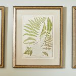 19th Century British Ferns-4