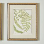 19th Century British Ferns-3