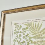 19th Century British Ferns-6