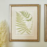 19th Century British Ferns-2