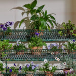 4 Tier Green Plant Stand-3